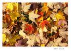 Herbst .......................