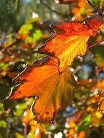 ..Herbst !!!...