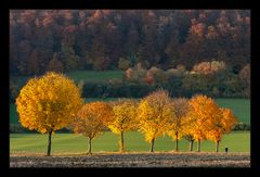 Herbst des Lebens... (in neuer Bearbeitung)
