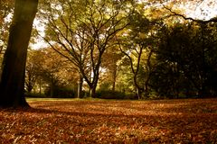 Herbst- Die schönste Jahreszeit