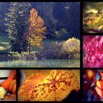 °° Herbst die zweite °°