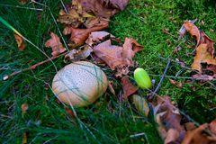 Herbst Eindrücke