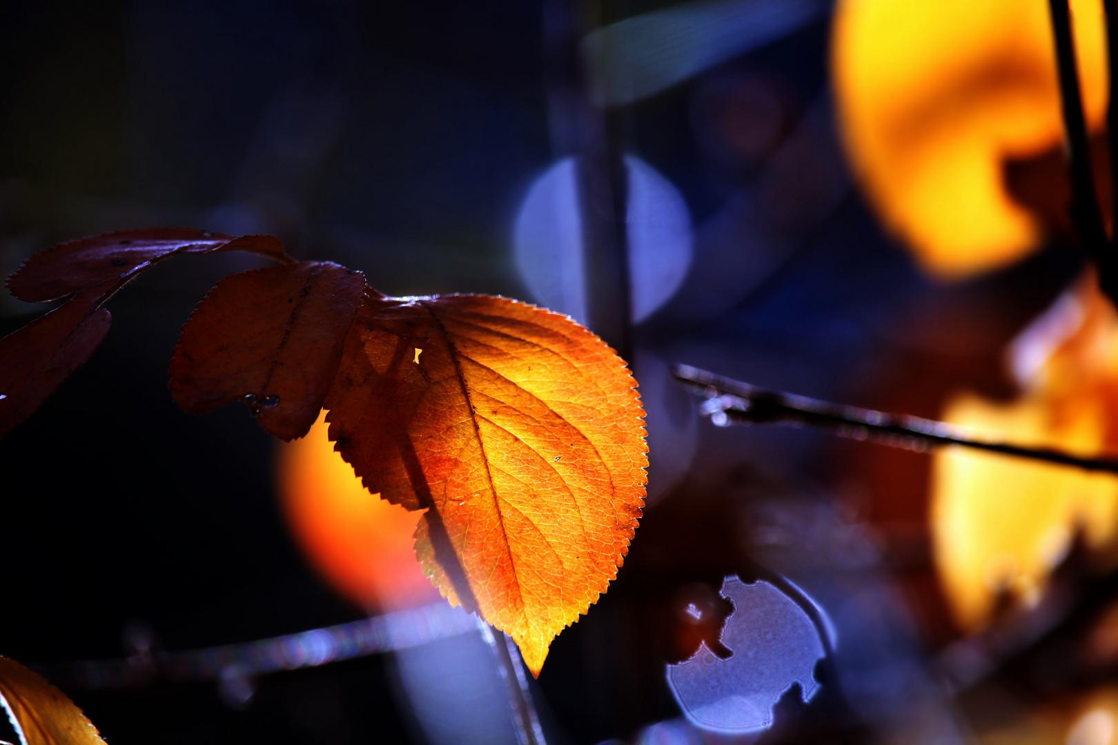 Herbst Erinnerung - autumn reminder