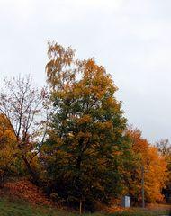 Herbst erobert die Natur