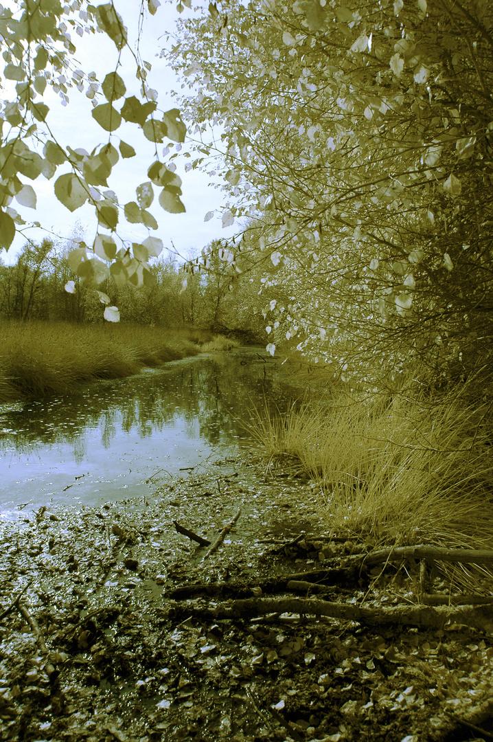 Herbst-erwachen
