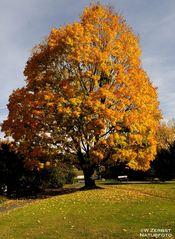 - Herbst - Farben 1 -