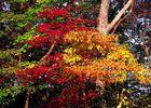 Herbst farben in Flag Rock, Virginia