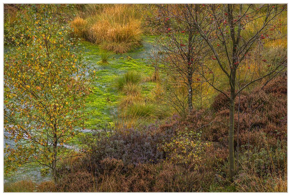 Herbst-Farben-Vielfalt im Hochmoor... (mit Diskurs über Schärfe und Komposition)