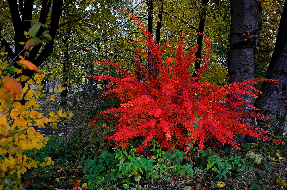 Herbst-Flash