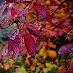 Herbst-Flash(2)