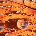 Herbst - Foto ist nicht bearbeitet. Nur was abgeschnitten. So wie es ist.