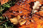 Herbst - Foto ist nicht bearbeitet. So wie es ist.