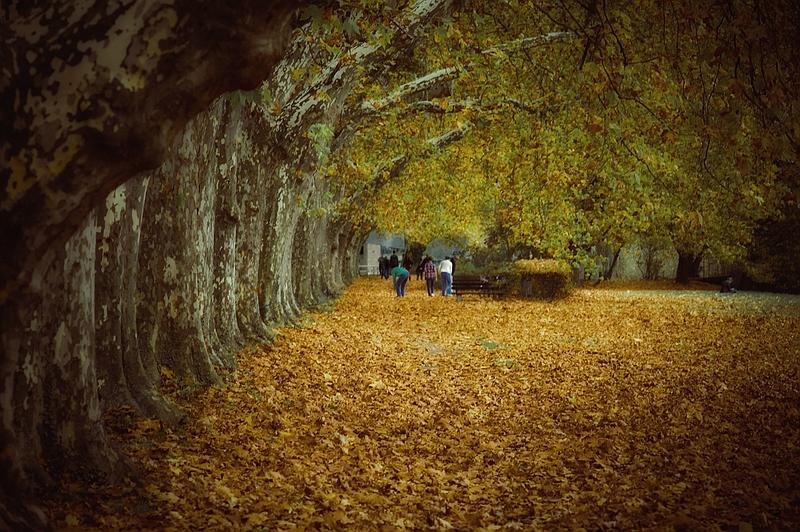 Herbst gefiltert