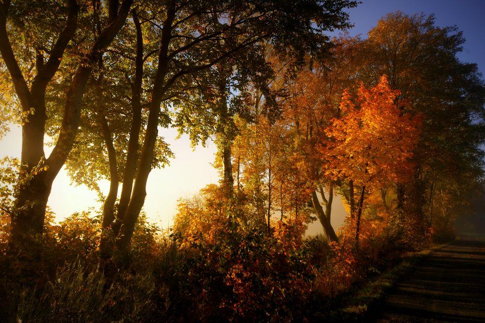 Herbst-Gefühle