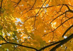 Herbst Gelb