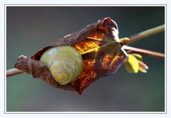 Herbst,  gemütlich...