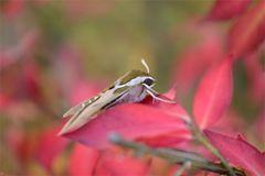 Herbst-Generation