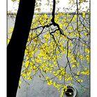 Herbst-Geometrie