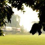 Herbst-Glimmen [Nord-Süd-Exkursion 2015]