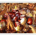 Herbst Gruß