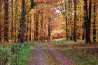 Herbst-Harz-Wald
