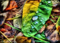 Herbst (( HDRI ))