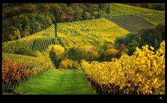HERBST | Heilbronner Land