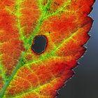 Herbst Herbstlaub Herbstfarben