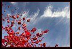 Herbst Himmel