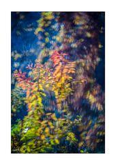 Herbst hinter Glas
