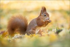 ~ Herbst-Hörnchen (2) ~