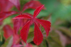 Herbst III...