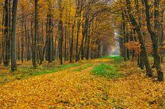 Herbst im Auewald