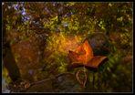 Herbst im Bach