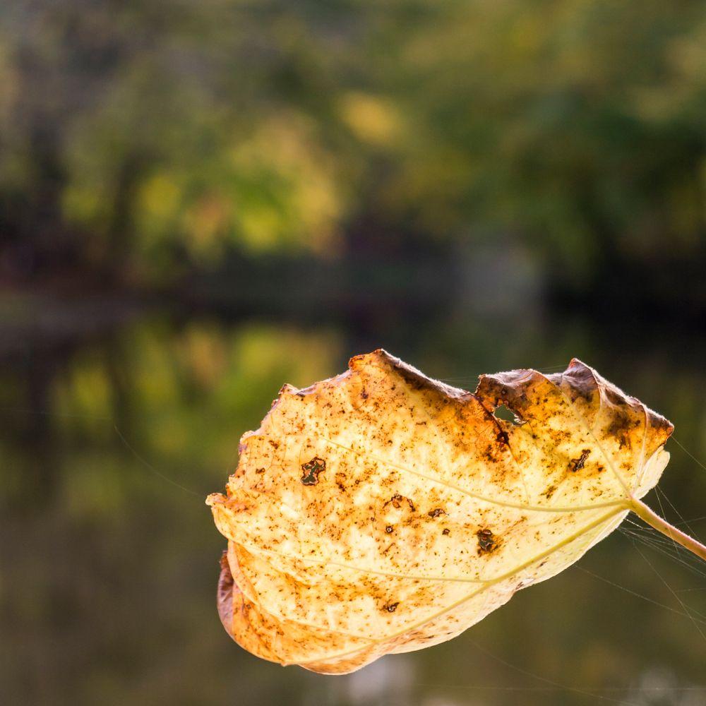 Herbst im Bagno