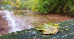 Herbst im Bagno II
