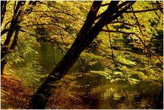 Herbst im Bamberger Hain