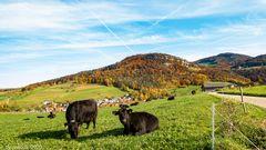 Herbst im Baselland 1