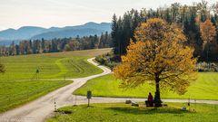 Herbst im Baselland