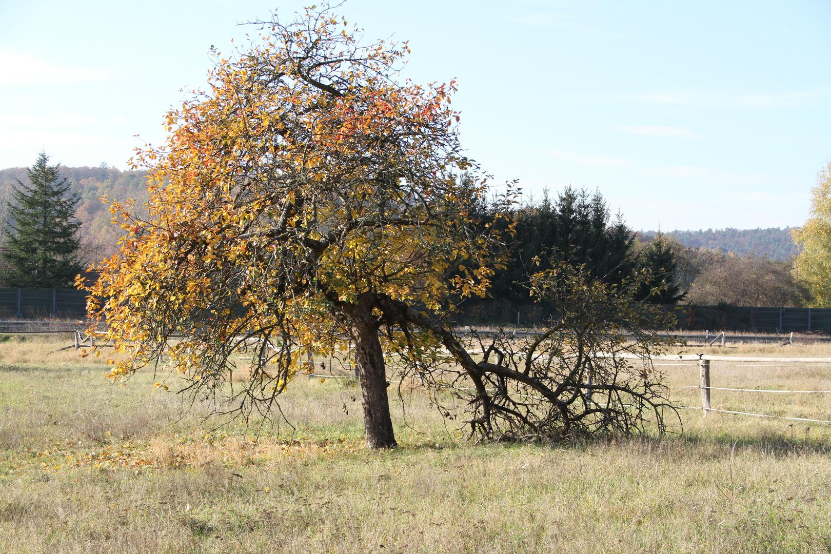 Herbst im Bioasphärenreservat