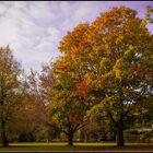 Herbst im Blohms Park