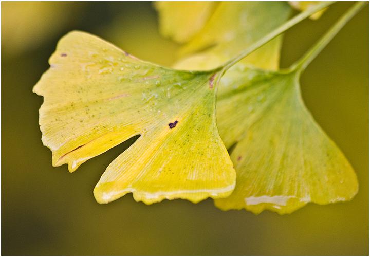 Herbst im Botanischen Garten VI