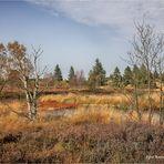 Herbst im Brackvenn ....