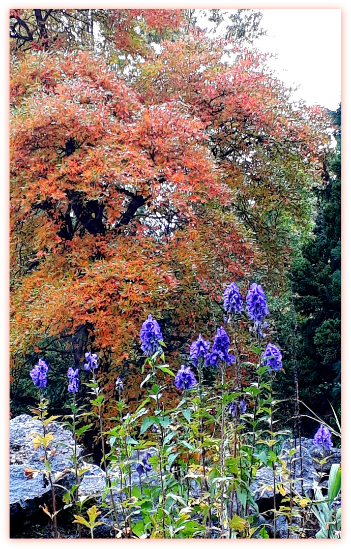 Herbst im Bunten Garten in MG