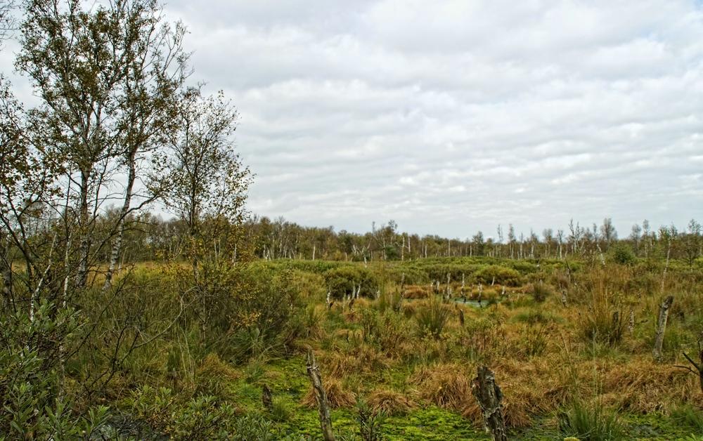 Herbst im Dorumer Hochmoor