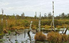 Herbst im Dorumer Hochmoor II