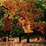 Herbst im Eichenhain 1