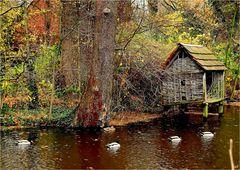 Herbst im Fluss