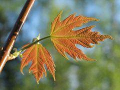 Herbst im Frühjahr?