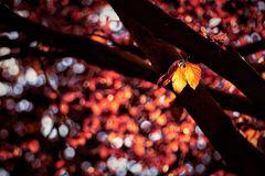 Herbst im Frühling?